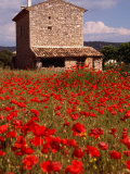 Stone Farmhouse in Field of Poppies  Provence-Alpes-Cote d&#39;Azur  France