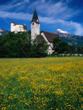 Field of Flowers in Front of Burg (Castle) Gutenburg and Church  Balzers  Liechtenstein