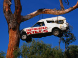Car Hanging on Tree  Safety Message on Old Coast Road in South-West  Australia