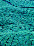 Aerial View of Boh Tea Plantation  Cameron Highlands  Malaysia