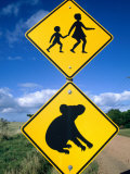 Children Crossing and Koala Crossing Signs on Dirt Road  Wonthaggi  Australia