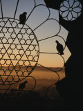 Birds Resting on Lattice Window  Jaipur  Rajasthan  India