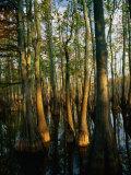 Horseshoe Lake Swamp at Dawn  USA