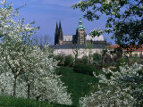Prague Castle and Cherry Blossoms of Petrin Hill  Prague  Czech Republic