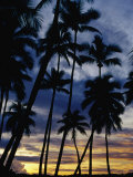 Palm Trees Silhouetted at Sunset  Fiji