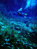 Diver Underwater  Nelson  New Zealand