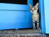 Kitten Standing in Doorway  Apia  Samoa