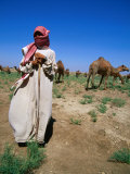 Young Man Herding Camels  Iraq