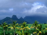Palm Trees and Mountain Peaks in Distance  Mauritius