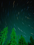 Star Trails and Pine Trees in Night Sky  Montana  USA
