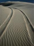 Tyre Tracks Leading into Stockton Sand Dunes  Newcastle  New South Wales  Australia
