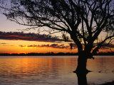 Tree Reflected in Lake Mournpoul at Sunrise  Hattah-Kulkyne National Park  Australia