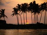 Palm Trees Silhouetted Against Sunset  Hikkaduwa  Southern  Sri Lanka