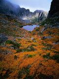 Deciduous Beech on Tasmania's West Coast Range  Tasmania  Australia