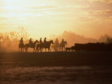 Silhouette of Stockman and Cattle South Australia  Australia