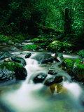 Liwagu River at Kinabalu National Park  Sabah  Malaysia