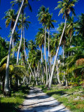 Gravel Road Through Palm Trees  French Polynesia