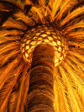 Extraordinary Palm Tree Illuminated in Front of the Santa Barbara County Courthouse  California