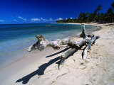 A Large Piece of Driftwood on the Idyllic Tropical Beach at Las Terrenas Dominican Republic