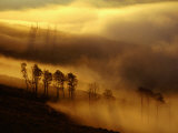 Dawn Mist Clears the Slope of Mt Washburn  Yellowstone National Park  Wyoming  USA