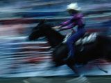 Rider in Rodeo at the Calgary Stampede  Calgary  Canada