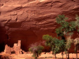 Anasazi Antelope House Ruin and Cottonwood Trees  Canyon de Chelly National Monument  Arizona  USA