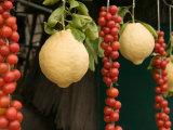 Sorrento Lemons and Cherry Tomatoes  Sorrento  Campania  Italy