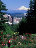 People at the Washington Park Rose Test Gardens with Mt Hood  Portland  Oregon  USA