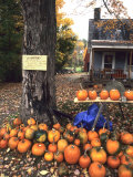 Pumpkins For Sale in New England