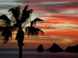 Sunset Palm with Rock Formation  Los Arcos in the Distance  Cabo San Lucas  Baja California  Mexico