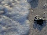 Fauna  Sea turtles  Yucatan  Mexico