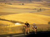 Road Cyclists Biking Through Wheat Harvest  near Pullman  Washington  USA