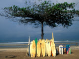 Surfboards Lean Against Lone Tree on Beach in Kuta  Bali  Indonesia