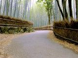 Bamboo Line  Kyoto  Japan
