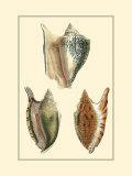 Classic Shells II