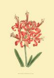 Le Fleur Rouge I
