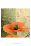 Orange Poppies III