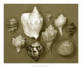 Shell Collector Series I