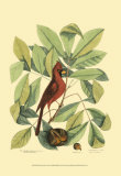 Red Bird and Hiccory Tree