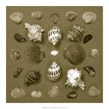 Shell Collector Series VI