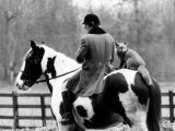 A Pet Fox Sits on the Horse of Its Owner