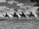 The Camel Corps of the King's African Rifles  October 1945