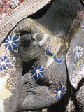 Decorated Elephant  India