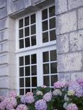 Purple Hydrangea in Front of Glass Window in Stone House