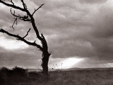 A Dead Tree is Silhouetted Against the Suns Rays on Heath Land  1935