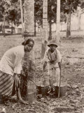 Woman and Young Boy Tap Rubber Trees in Malaya and Collect the Sap in Buckets
