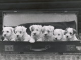 Six Puppies