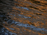 Gold and Blue Sunlight Reflecting on Dark Rippling Water