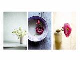 Zen Blossoms Triptych