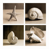 Sea Shells Four Patch